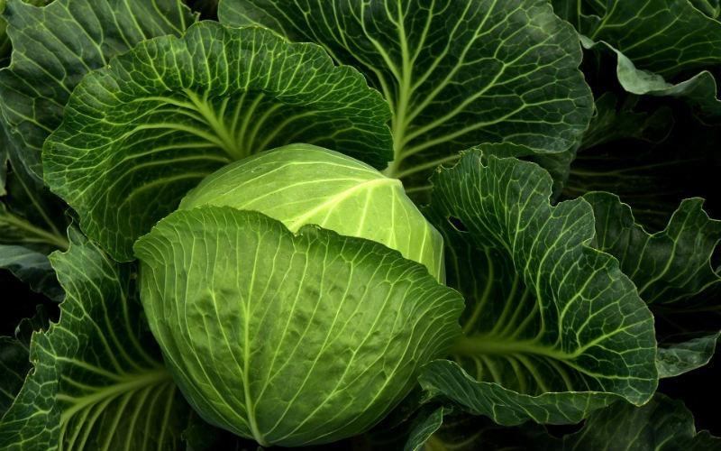 Estos son los alimentos que más gases producen