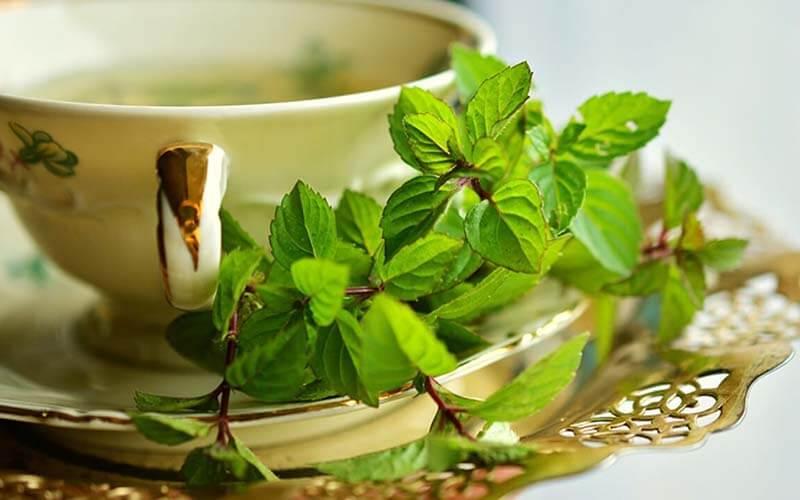 Té verde: beneficios, propiedades y cómo prepararlo