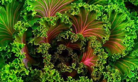 Kale: beneficios para la salud de este superalimento