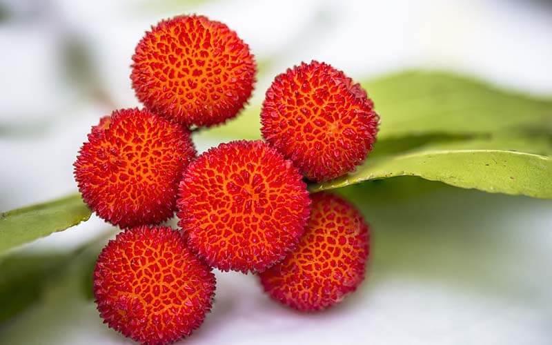 Lichi: beneficios para la salud de esta fruta exótica