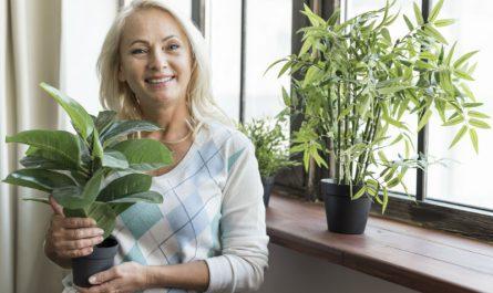 beneficios para la salud de las plantas en casa
