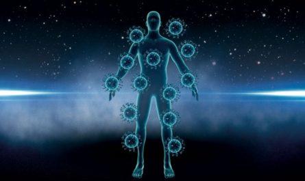 Qué tipos de organismos habitan en el cuerpo