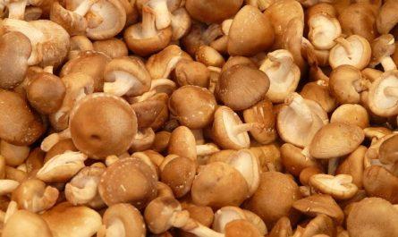 Propiedades de los hongos Shiitake, Reishi y Maitake